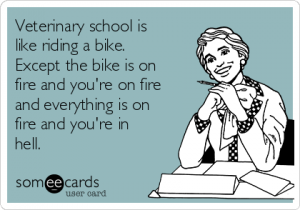 veterinary-school-is-like-riding-a-bike-except-the-bike-is-on-fire-and-youre-on-fire-and-everything-is-on-fire-and-youre-in-hell-ed11e